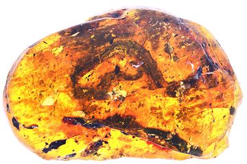 This amber nugget from Myanmar holds the first known baby snake fossil