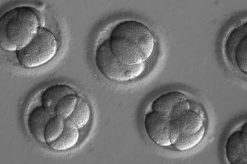 Researchers say CRISPR edits to a human embryo worked. But critics still doubt it