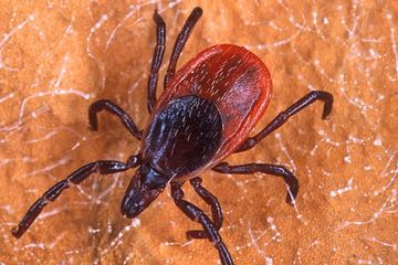 Lyme and other tickborne diseases are on the rise in the U.S. Here's what that means.
