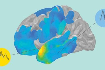 Ripples race in the brain as memories are recalled