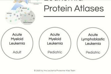 The Leukemia Atlas: researchers unveil proteins that signal disease