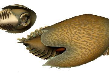 This newfound predator may have terrorized the Cambrian seafloor
