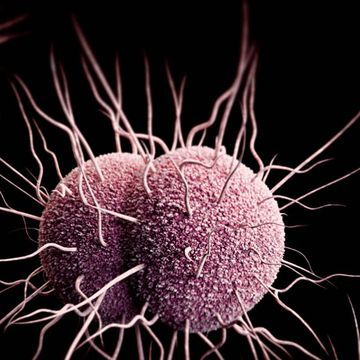 A new drug may boost dwindling treatment options for gonorrhea