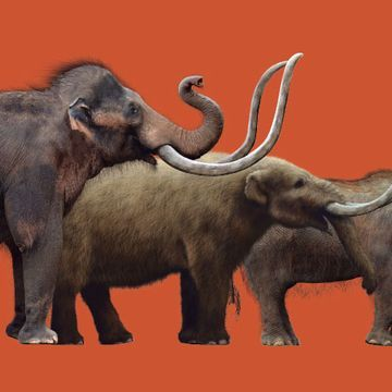 How mammoths competed with other animals and lost