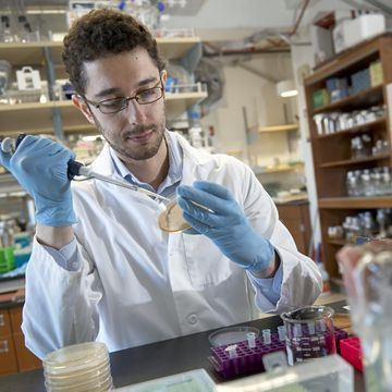 Montana State postdoctoral researcher wins LSRF fellowship for CRISPR research