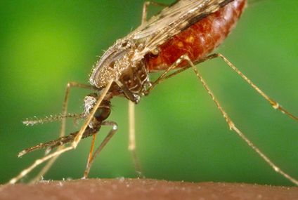 A newly approved drug could be a boon for treating malaria