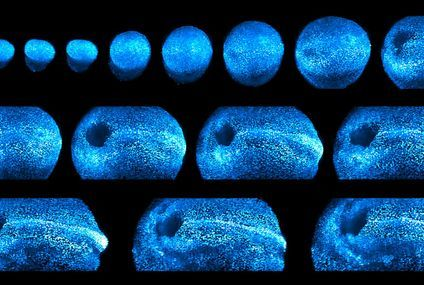 See these dazzling images of a growing mouse embryo